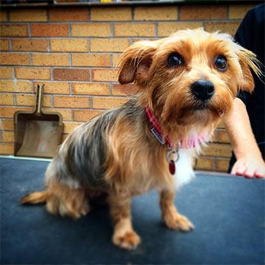 Dog Grooming Northfield Birmingham