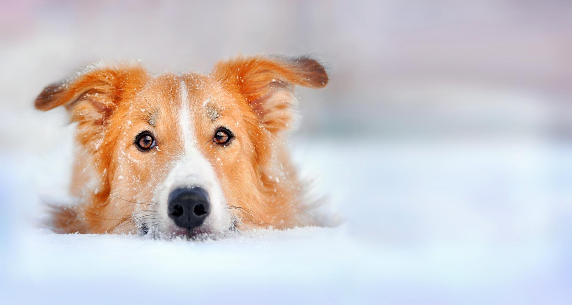 Dog Reiki Courses Uk