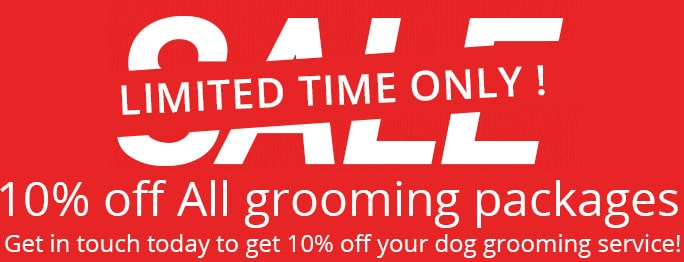 dog grooming discount