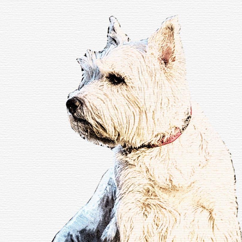 Dog Grooming Courses Birmingham