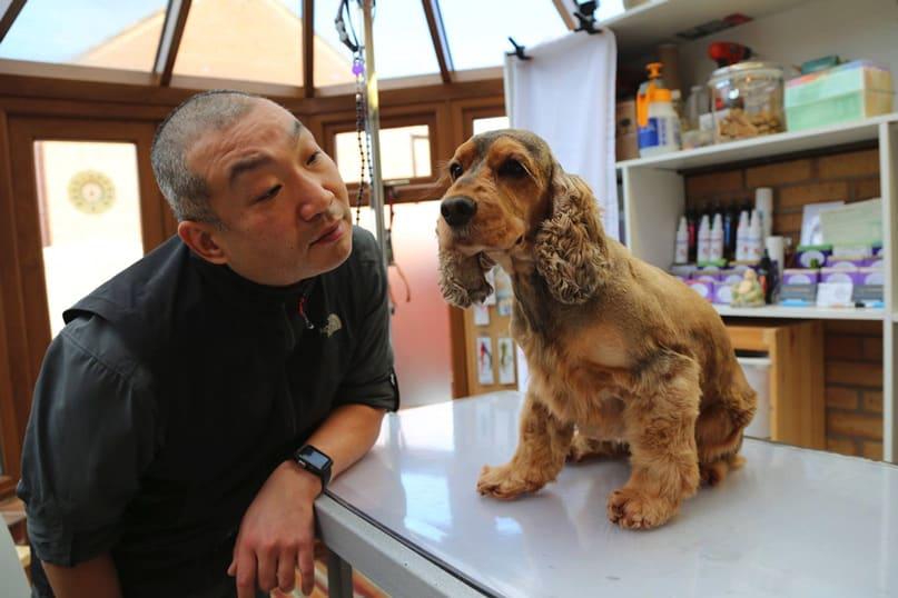 dog grooming birmingham