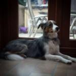 dog nutrition birmingham