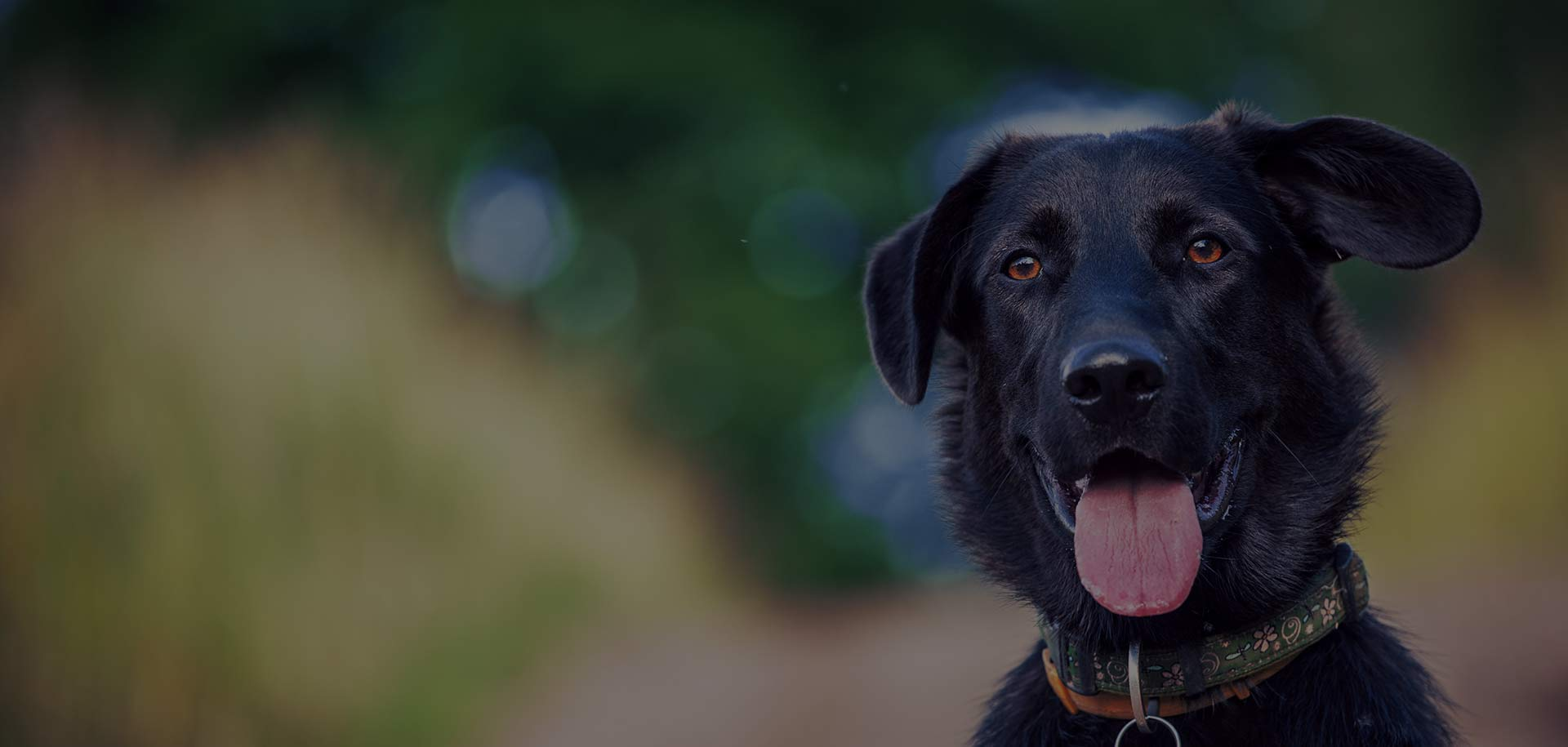 Dog grooming halesowen