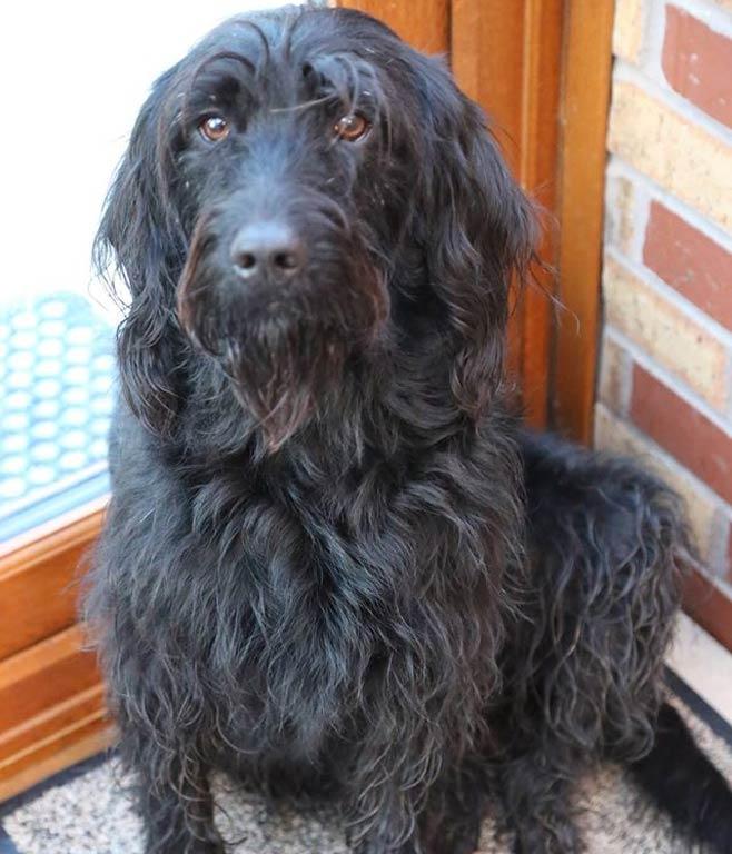 Dog grooming Birmingham | Dog styling Birmingham
