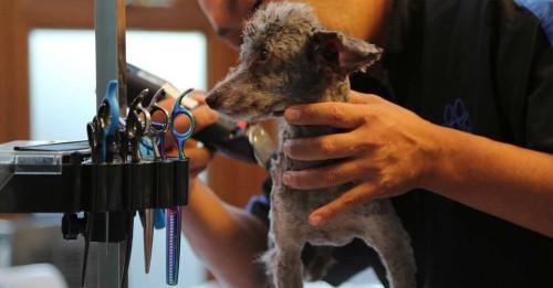 dog groomers in South Birmingham