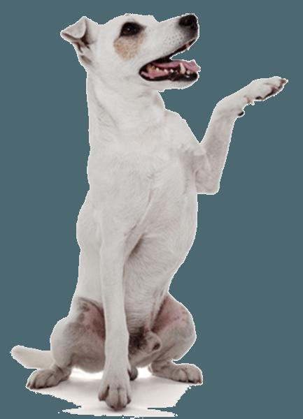 dog training courses birmingham